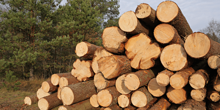 Lumber Prices Begin to Fall: Are We Out of the Woods?